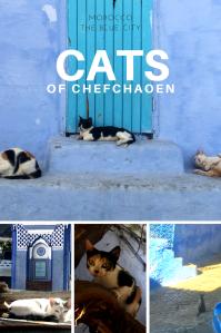 cats of chefchaoen Pinterest